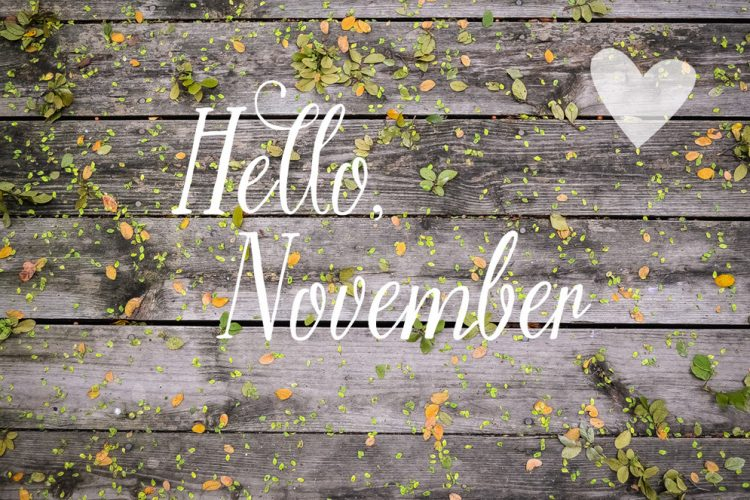 November 2015 Newsletter: November News! Bring a friend+ Herbal tips+ Our 3rd B-day