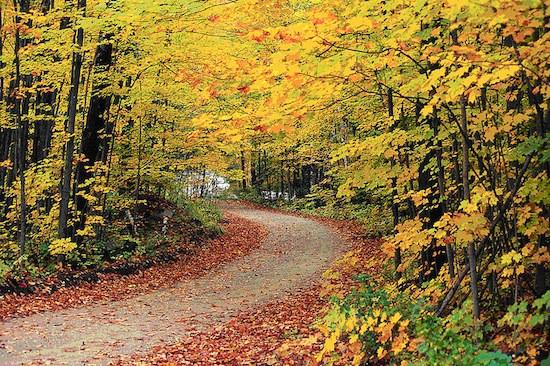 October 2015 Newsletter: ? Autumn Updates! Wellness Tips! Recipes! ?